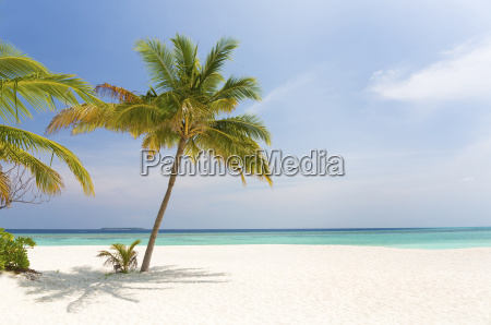 tropical beach scene coco palm resort