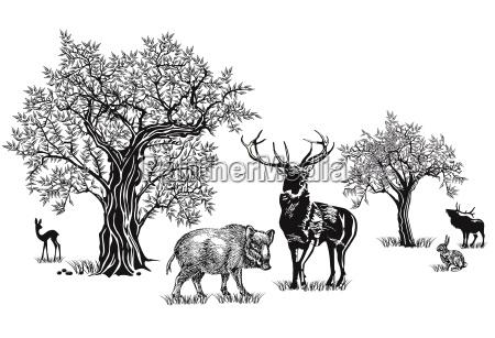 deer and wild boar