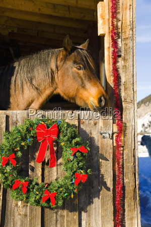 horse in barn decorated for the