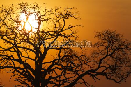 tree trees national park sunset mood